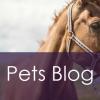 Pets – Blog