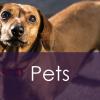 Home – Pets