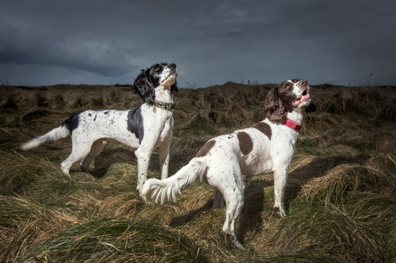 Aberdeen pet photographers-114