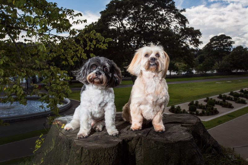 Aberdeen pet photographers-125
