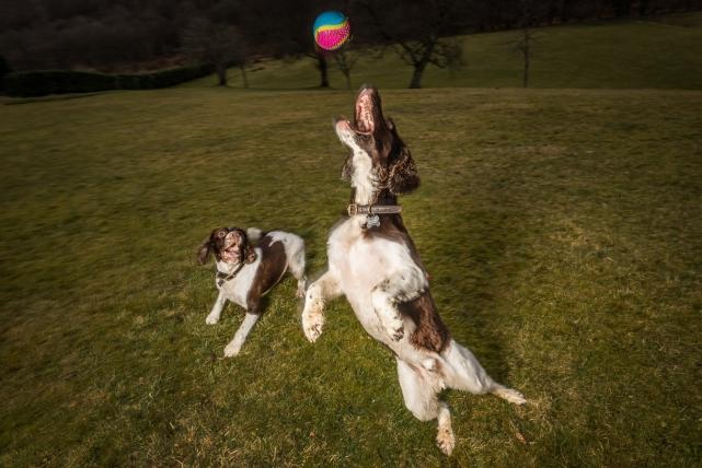 A dog photograph taken by Jonathan Addie, an Aberdeen based pet photographer.