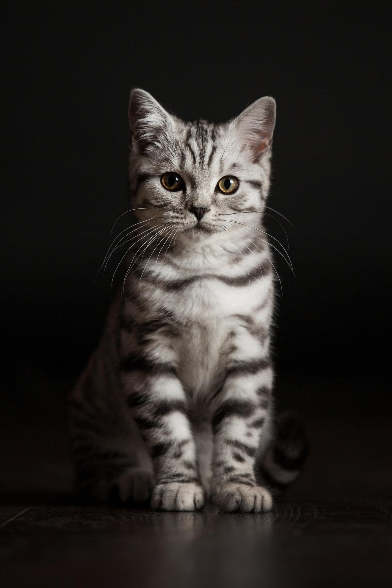 A cat photograph taken by Jonathan Addie, an Aberdeen based pet photographer.
